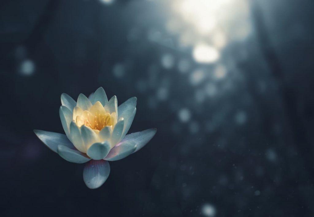 petal on water